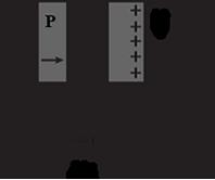 a hyoid vénák saccularis visszér
