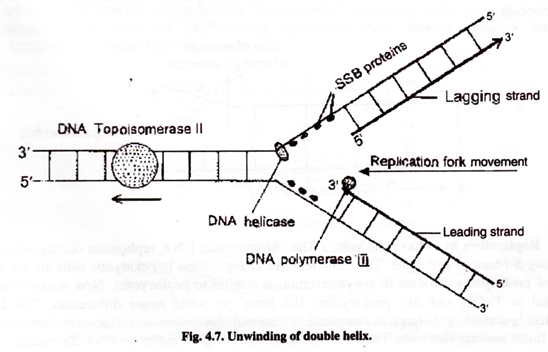 Write An Essay On Dna Replication Biology Questions