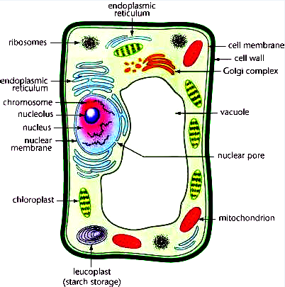 Draw a diagram of typical cell and label the following parts in it.Cell  membraneVacuoleNucleusEndoplasmic reticulumMitochondriaGolgi bodyToppr